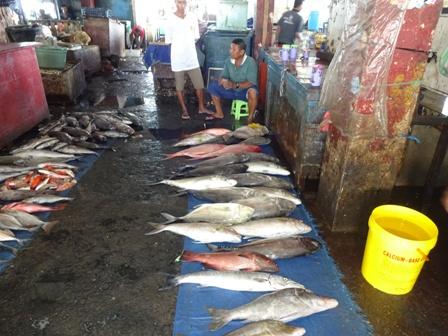 アンボン島(魚市場)_d0083068_12125770.jpg