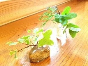 愛しい日々 〜植物編〜 ***_e0290872_17270100.jpeg