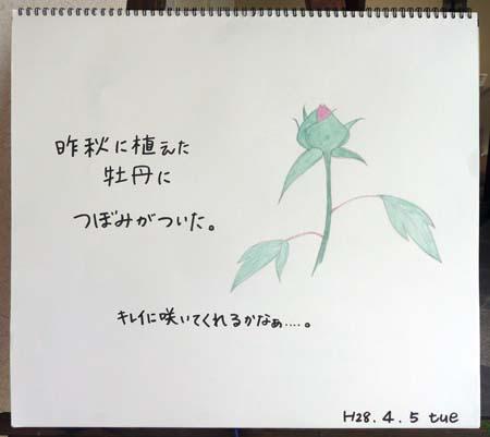 つぼみ_b0364195_1463093.jpg