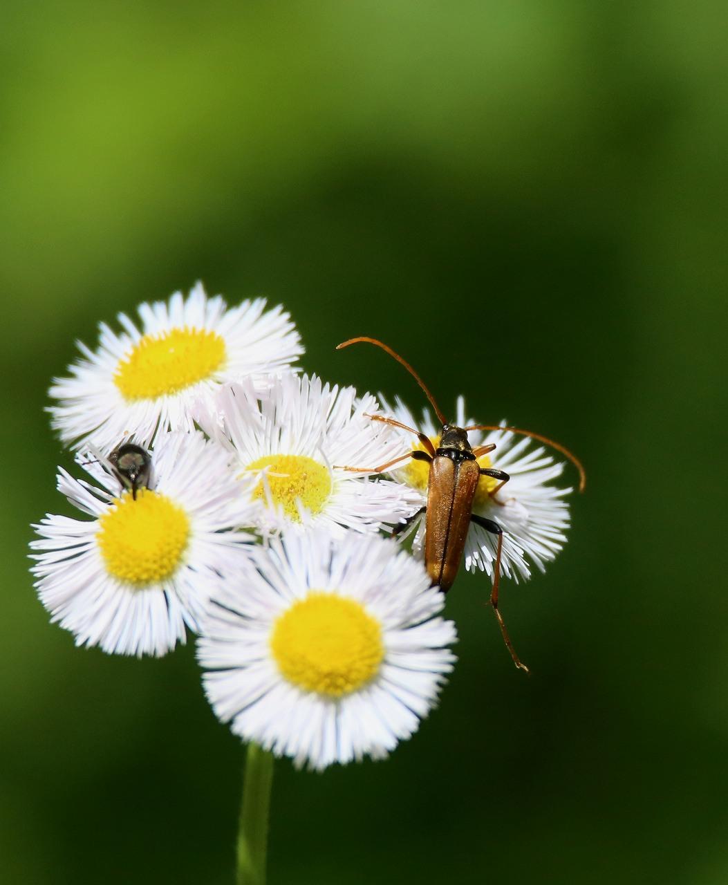 オオヨシキリの季節/AP公園の昆虫_f0296999_17124672.jpg