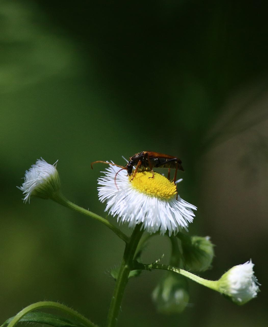 オオヨシキリの季節/AP公園の昆虫_f0296999_1713180.jpg