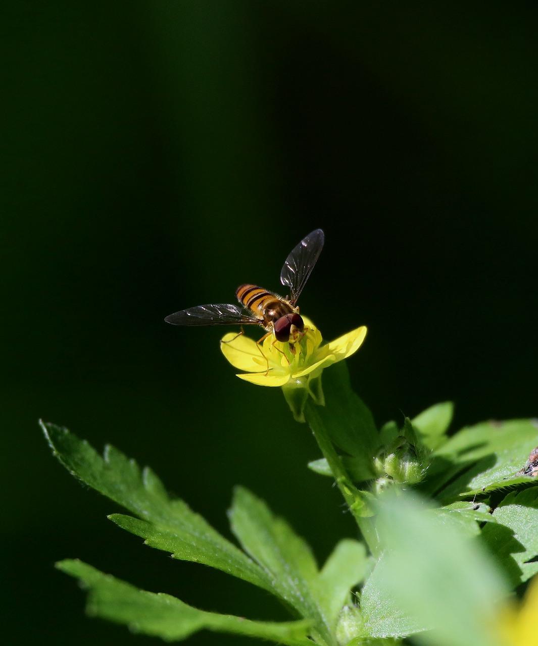 オオヨシキリの季節/AP公園の昆虫_f0296999_17133110.jpg