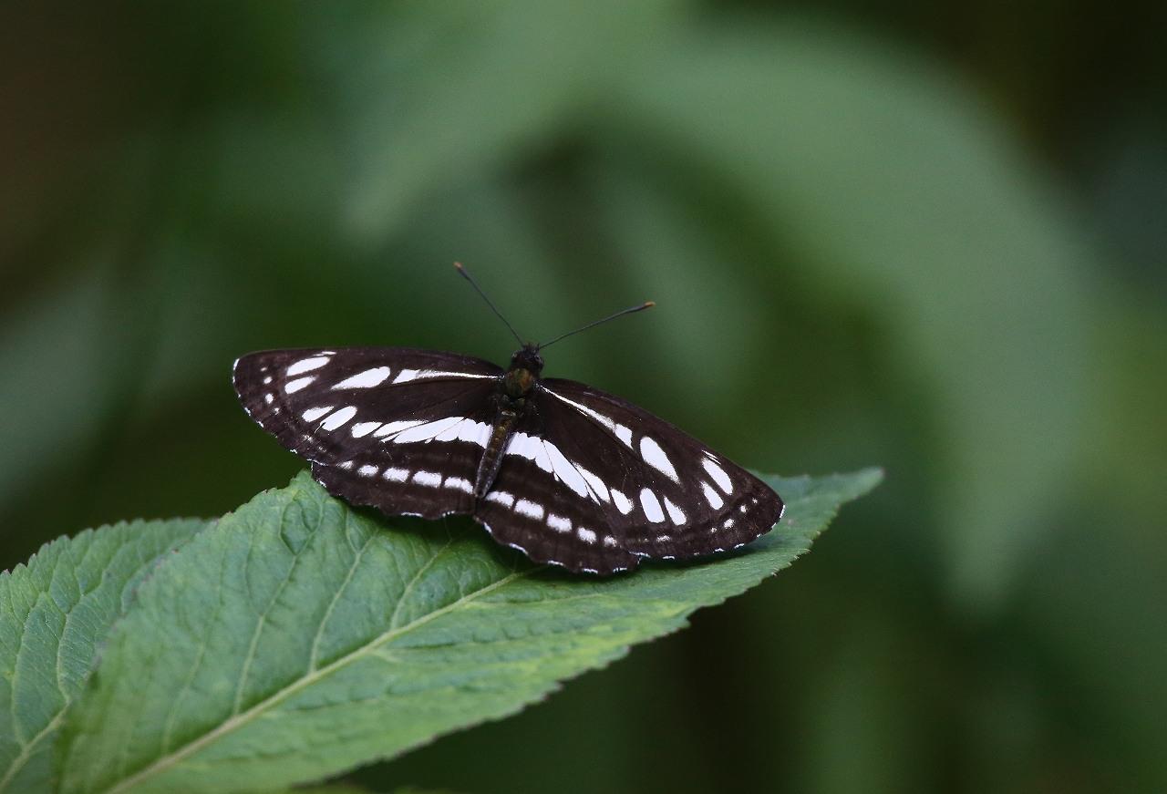 オオヨシキリの季節/AP公園の昆虫_f0296999_1714012.jpg