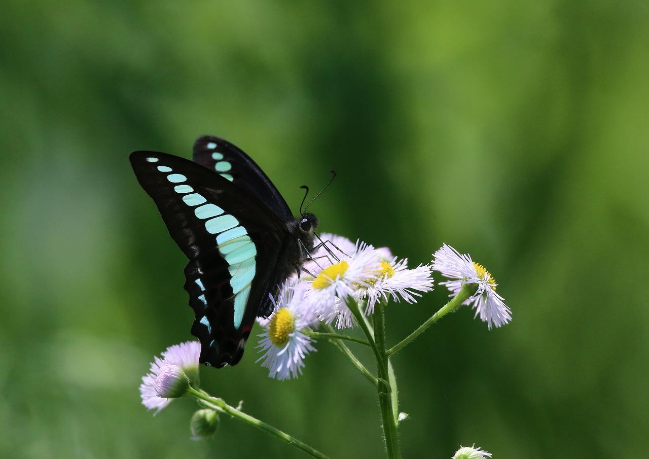 オオヨシキリの季節/AP公園の昆虫_f0296999_17153954.jpg