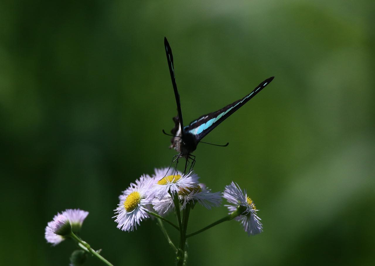 オオヨシキリの季節/AP公園の昆虫_f0296999_1715494.jpg