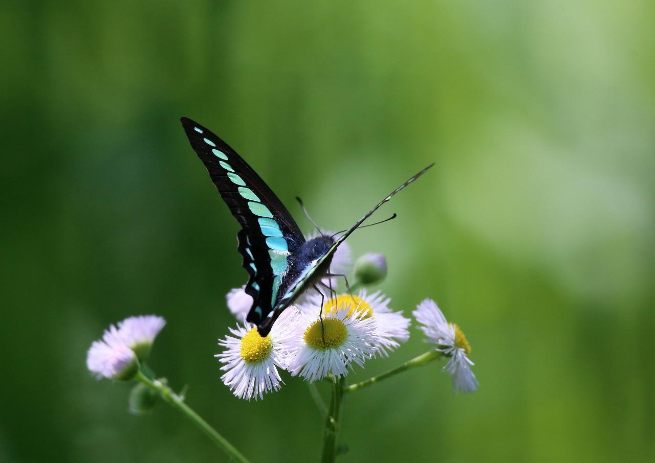 オオヨシキリの季節/AP公園の昆虫_f0296999_1716033.jpg