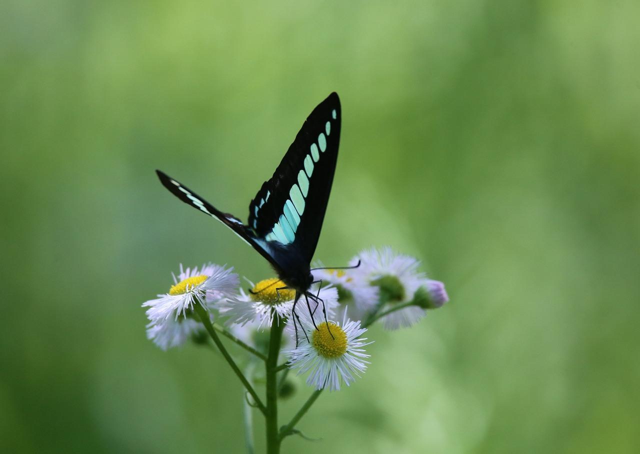オオヨシキリの季節/AP公園の昆虫_f0296999_17161020.jpg