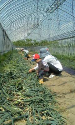 こんなにでかい玉ねぎが収穫出来たよ。_d0026905_1320441.jpg