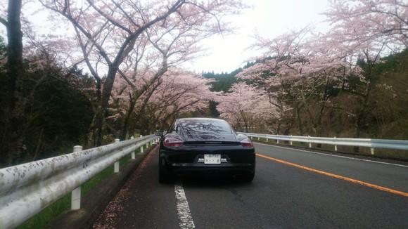 桜舞う日に_c0075224_14474150.jpg