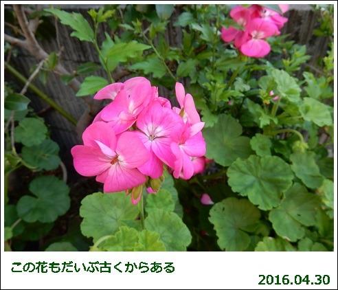 e0033229_1820433.jpg