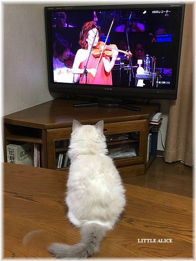 ☆ラグド-ルの仔猫・・なかよしさん。_c0080132_9371979.jpg