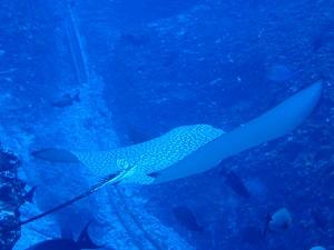 タヒチ~ランギロアブルーの海へ③_f0233340_0115423.jpg