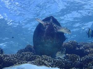 タヒチ~ランギロアブルーの海へ③_f0233340_0135630.jpg