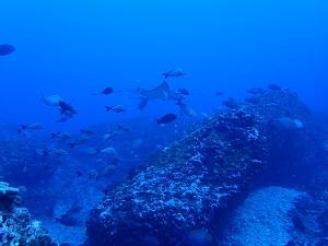 タヒチ~ランギロアブルーの海へ④_f0233340_1558996.jpg