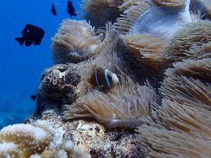 タヒチ~ランギロアブルーの海へ④_f0233340_1694412.jpg