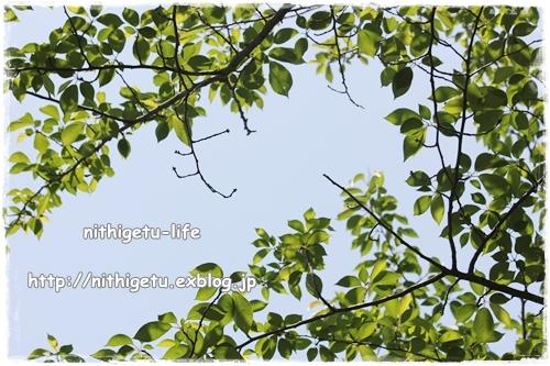 c0323244_23453057.jpg