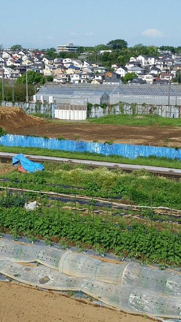 トマトの畝櫓作り第2弾です・・ ズッキーニの花が付いてきました_c0222448_11281969.jpg