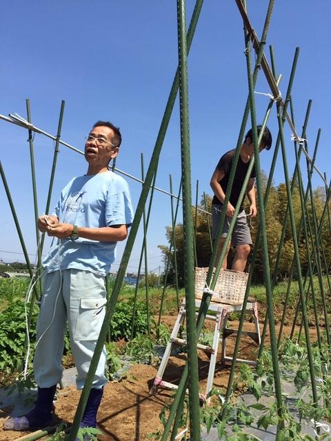 トマトの畝櫓作り第2弾です・・ ズッキーニの花が付いてきました_c0222448_15104992.jpg