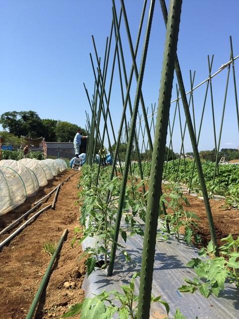 トマトの畝櫓作り第2弾です・・ ズッキーニの花が付いてきました_c0222448_15115853.jpg