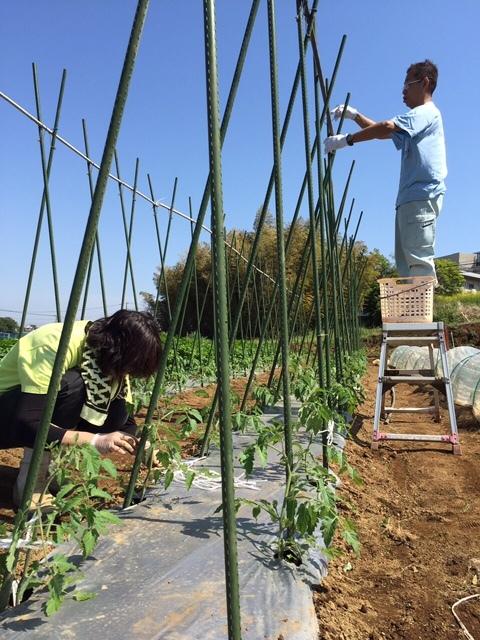 トマトの畝櫓作り第2弾です・・ ズッキーニの花が付いてきました_c0222448_15124529.jpg