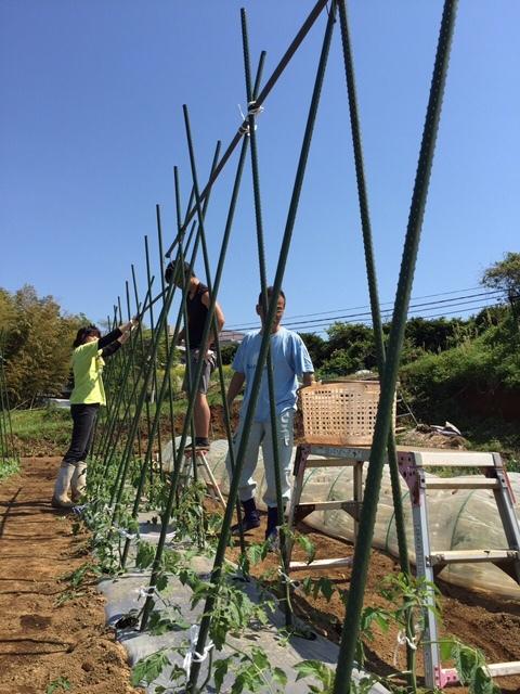 トマトの畝櫓作り第2弾です・・ ズッキーニの花が付いてきました_c0222448_15251113.jpg