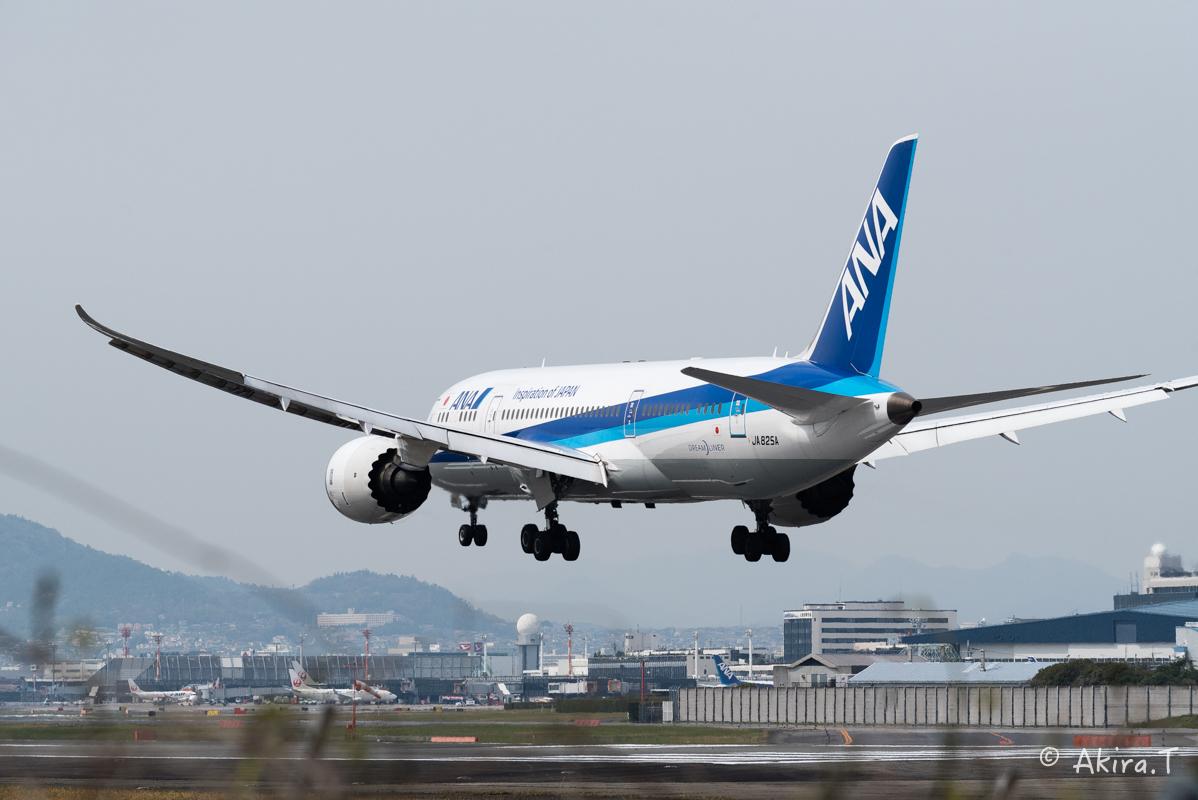 大阪伊丹空港 千里川堤防 -2-_f0152550_185720100.jpg