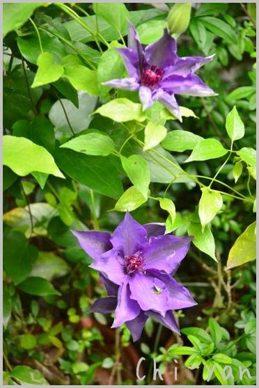 夏を迎える花々_e0219011_10265273.jpg