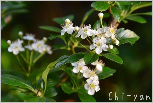 夏を迎える花々_e0219011_10273336.jpg