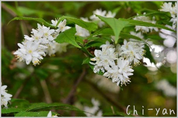 夏を迎える花々_e0219011_10274691.jpg