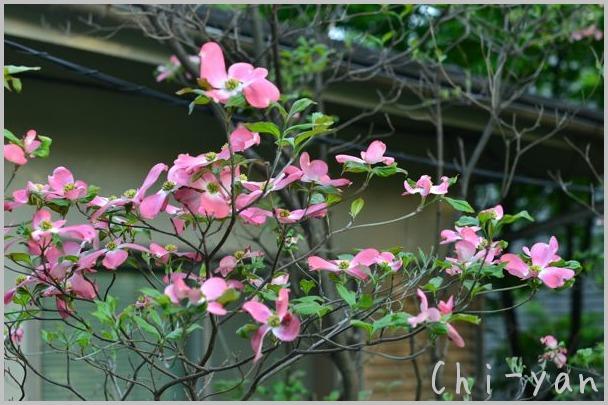 夏を迎える花々_e0219011_1028384.jpg
