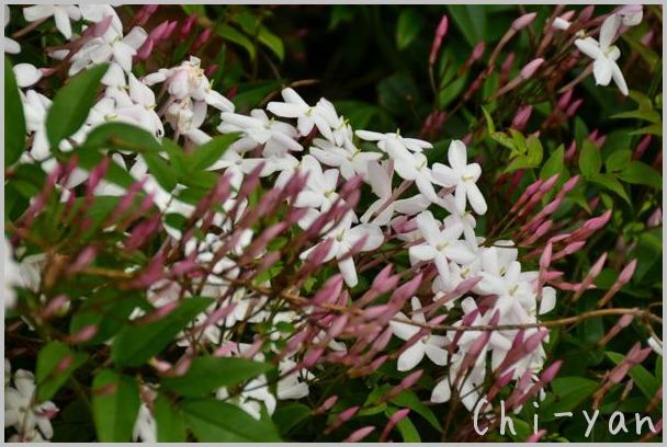 夏を迎える花々_e0219011_1029178.jpg