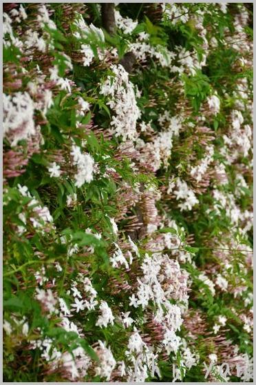 夏を迎える花々_e0219011_10293480.jpg