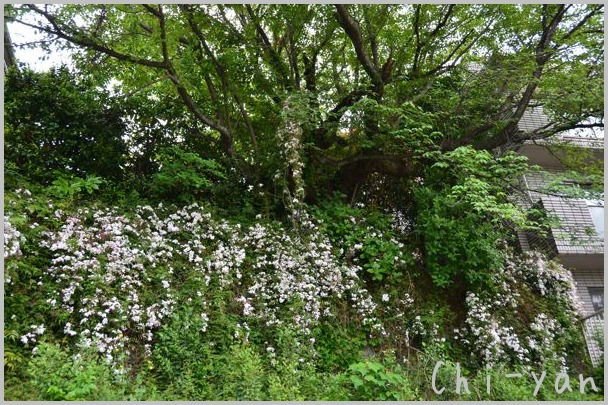 夏を迎える花々_e0219011_10294626.jpg