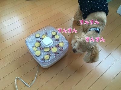 f0326925_12154268.jpg