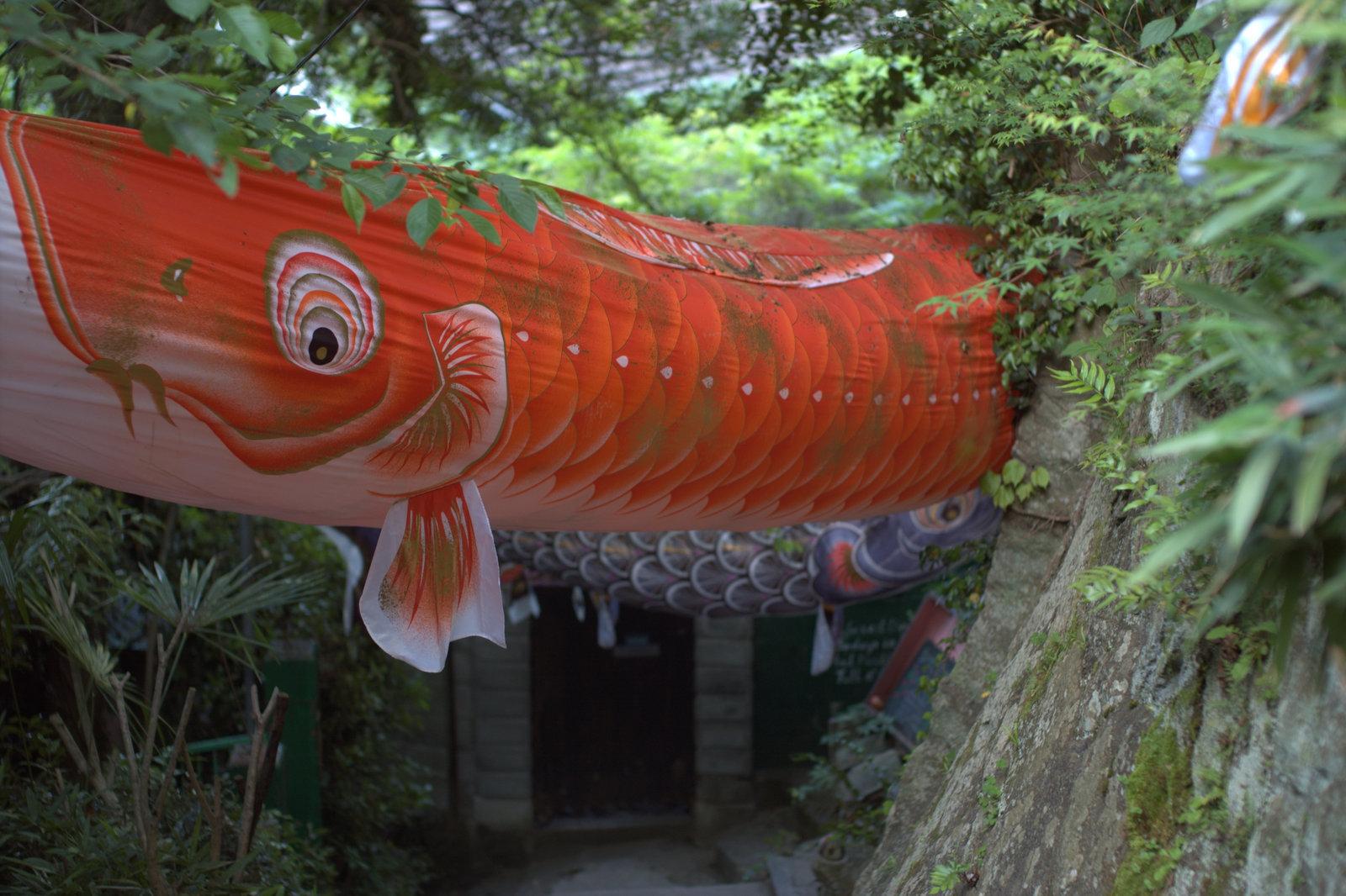 scene1386:いろんな鯉のぼり_e0253132_22363843.jpg