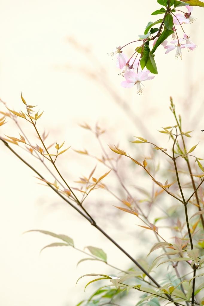 庭の春 FUJIFILM  X Series Face bookより_f0050534_10322180.jpg