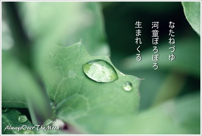f0053297_14405664.jpg