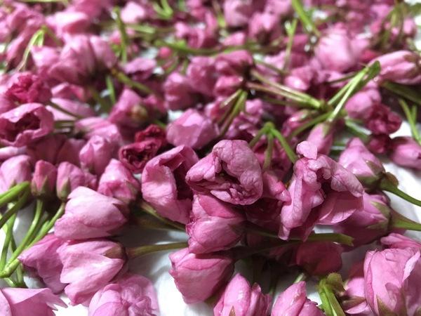 「桜の塩漬け」_a0120513_22324229.jpg