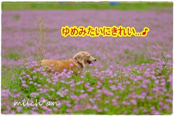 b0115642_22375513.jpg