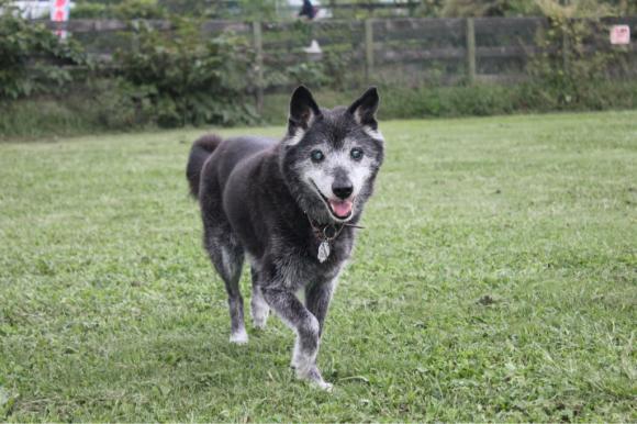 老犬介護のセミナー_a0126743_15363826.jpg