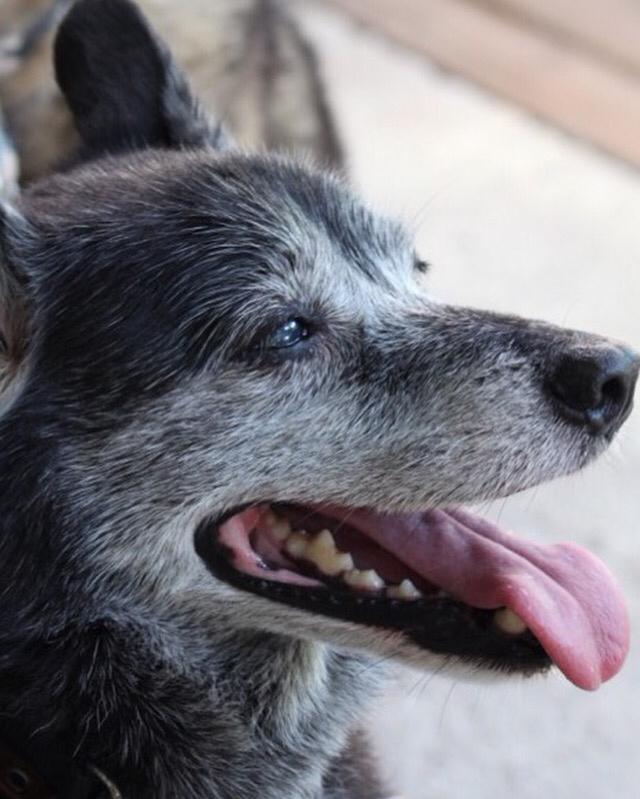 老犬介護のセミナー_a0126743_15363889.jpg