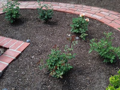 My Little Rose Garden_d0154102_13543967.jpg