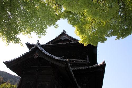 南禅寺も青もみじ_e0048413_21125425.jpg
