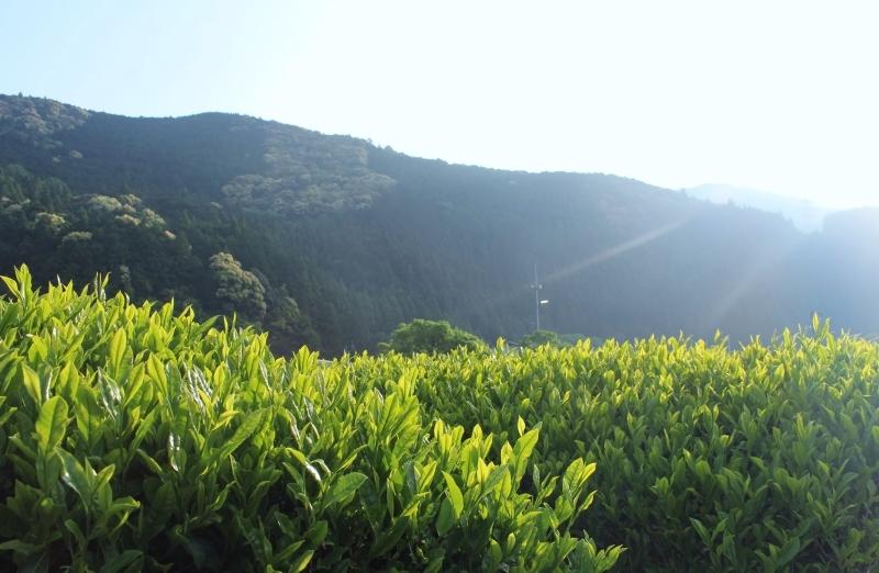 今年も秋葉山で_b0220318_23020676.jpg