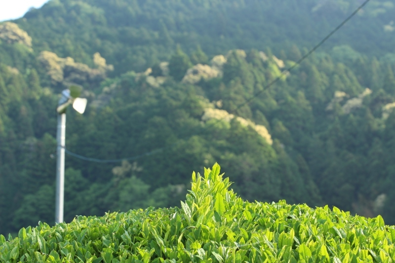 今年も秋葉山で_b0220318_23023499.jpg