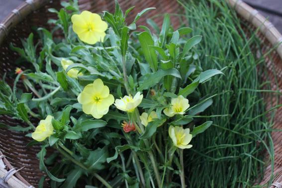 美容に良い普段飲みの野草茶を作ってます_a0329820_11561906.jpg
