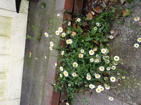 花だより_f0148927_13224854.jpg