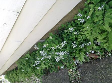 花だより_f0148927_13255283.jpg