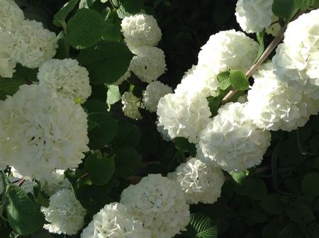 花だより_f0148927_13344073.jpg