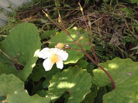 花だより_f0148927_1337266.jpg